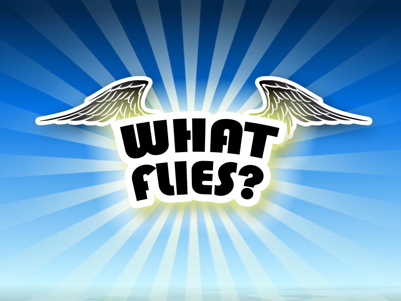 What Flies? - Concept
